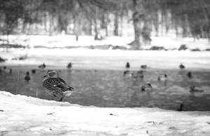 Winter in Maksimir park 2012 BW - 2 by hrvojemihajlic