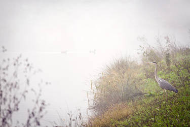 Cold foggy late autumn morning by hrvojemihajlic
