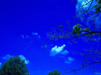Clear Sky on Preakness morning by 00WIZ
