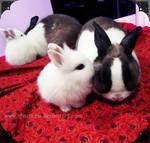 bunny kiss by Choc0Chu