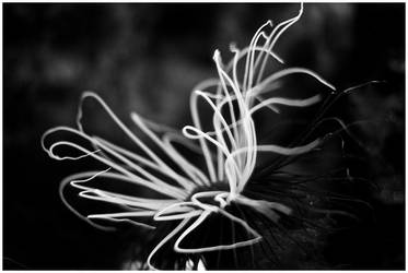 .aqua by nativa