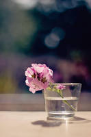 A Glass Full of Flowers by kinipelahh