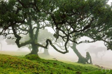 Laurel Woods by Dapicture