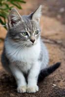 a cute cat by maxim1990