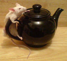 Taxidery mouse on small teapot by amandas-autopsies
