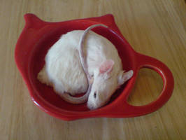 Taxidermy mouse in teadish 2 by amandas-autopsies