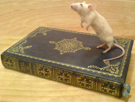 Mouse standing on book by amandas-autopsies