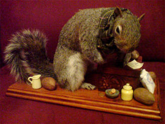 Taxidermy Squirrel by amandas-autopsies