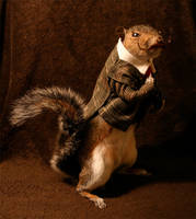Taxidermy Squirrel with pipe and moustache by amandas-autopsies