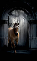 Where's Wonderland? by horsesareforever