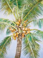 Coconut III Series by JellyStarnes