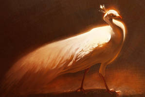 White Peacock by Pixxus