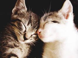 Sweetest Dreams by Bishy-Waya