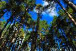 Morning trees by Popovv