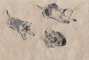 printed kitty by Unita-N