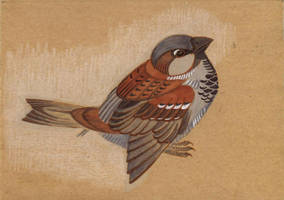 House sparrow by Unita-N