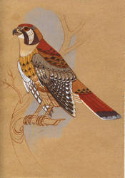 American Kestrel Falcon by Unita-N
