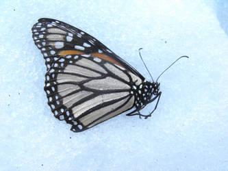 Frozen From Flight. by SeeMeClear