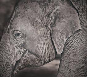 Elephant by Real-Nela
