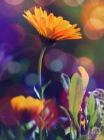 Miss Sunshine by Pzychonoir