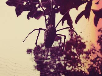 spider by rezzamuhammad