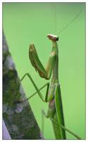 'Praying' Mantis by JetStrike