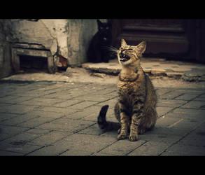 meow by VovaMelnyk