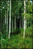 BG Birch Grove II by Eirian-stock
