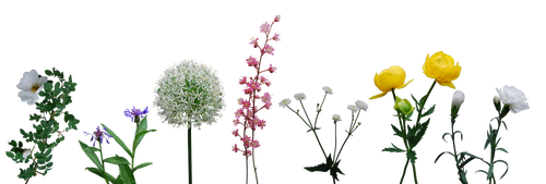 Flower Collection by Eirian-stock