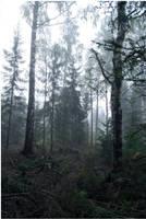 BG Forest Mist III by Eirian-stock