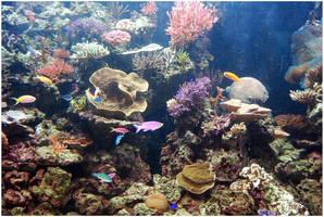 Underwater V by Eirian-stock