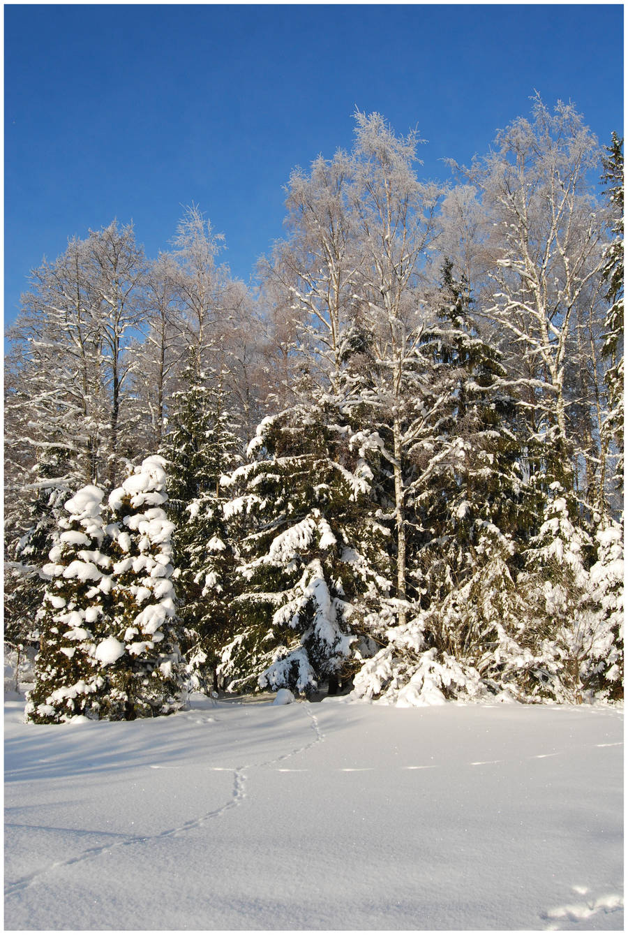BG World Of Snow XIV by Eirian-stock
