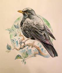 Blackbird by Azurenex