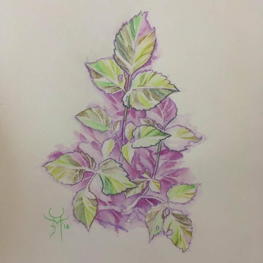 A Little Plant by Azurenex