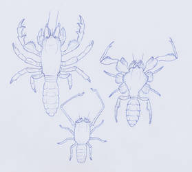 The new insects by juniorWoodchuck