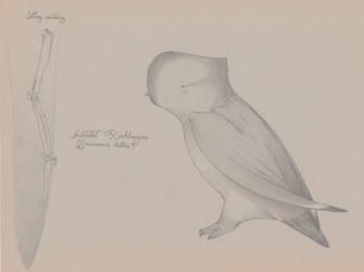 TERRA MIRUS: Hatchet Rockhopper by juniorWoodchuck
