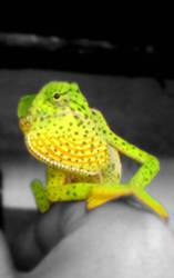 chameleon by Cheynez
