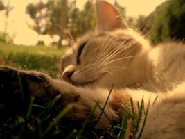 Sleep. by shadddow
