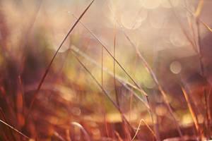 Trawy. by shadddow