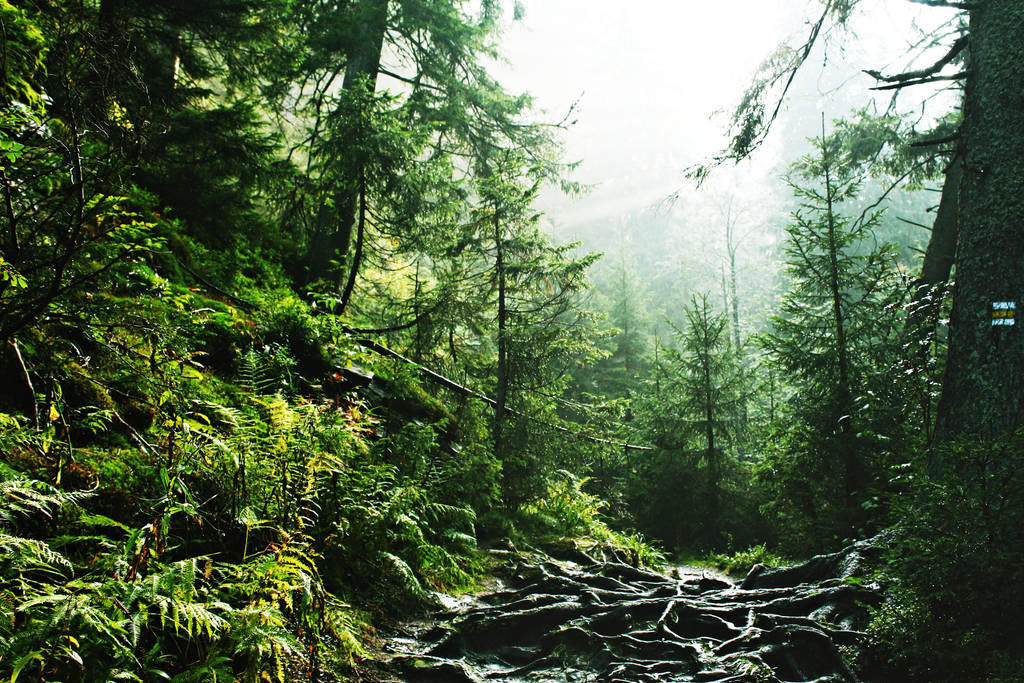 Forest I by shadddow