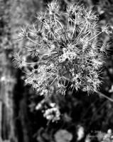 Snowflake by Moonbeam13