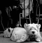 Frankie + Jordie by Moonbeam13