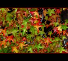 The Last Dance by Vividlight