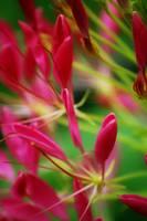 Crimson And Clover by Vividlight