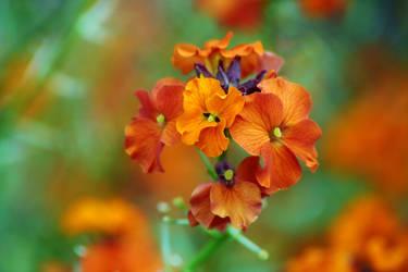 Beauty Of  Life Hafsol by Vividlight