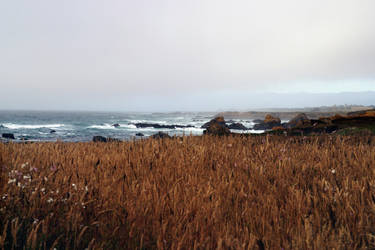 Glass Beach Through The field by Vividlight