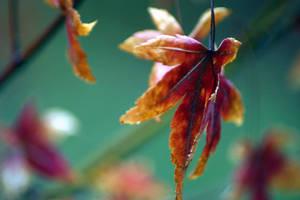 Scatter My Love Like Leaves... by Vividlight