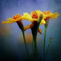 Still Raining, Still Dreaming by Vividlight