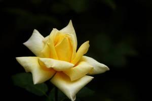 In Full Bloom by Vividlight