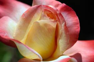 Eternal Spring by Vividlight
